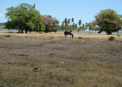 23.toeatchtheirown.costarica.beach.horse-1080px